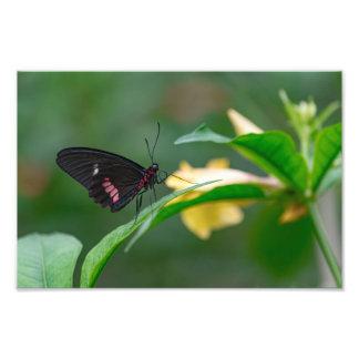 ミシェールDiehl著黒くおよび赤い蝶 フォトプリント