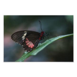 ミシェールDiehl著黒く、ピンクの蝶 フォトプリント