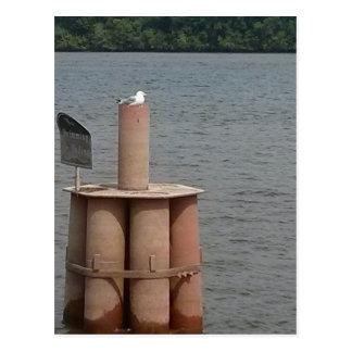 ミシシッピー川のカモメ ポストカード