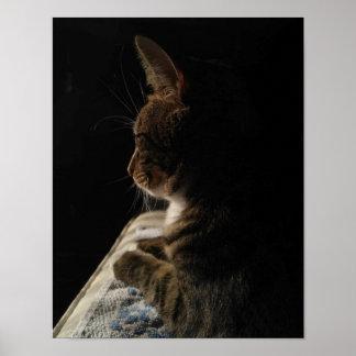 ミステリー猫 ポスター