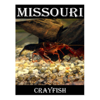 ミズーリのCrawfish ポストカード