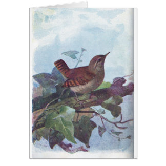 ミソサザイ カード