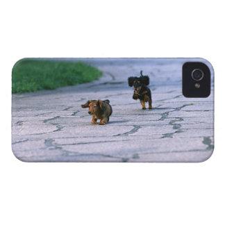ミニチュアダックスフント3 Case-Mate iPhone 4 ケース