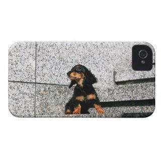 ミニチュアダックスフント4 Case-Mate iPhone 4 ケース