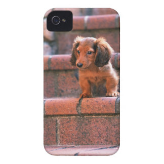 ミニチュアダックスフント Case-Mate iPhone 4 ケース