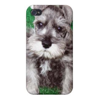 ミニチュア・シュナウツァーの子犬のiphone 4ケース iPhone 4 case