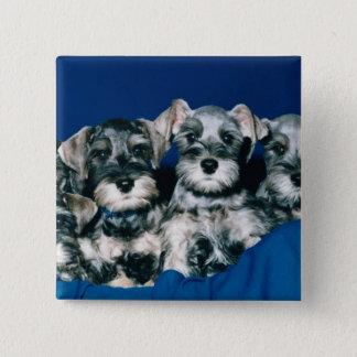 ミニチュア・シュナウツァーの子犬 5.1CM 正方形バッジ