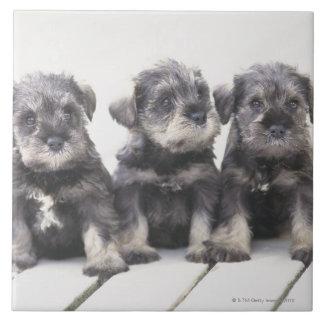 ミニチュア・シュナウツァーは小さい犬の品種です タイル