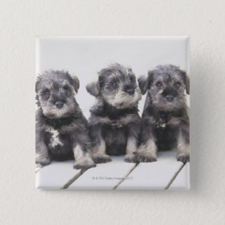 ミニチュア・シュナウツァーは小さい犬の品種です 5.1CM 正方形バッジ