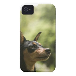 ミニチュア・ピンシャー(分Pin) 2 Case-Mate iPhone 4 ケース