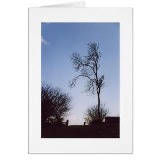 ミュンスターの木 カード