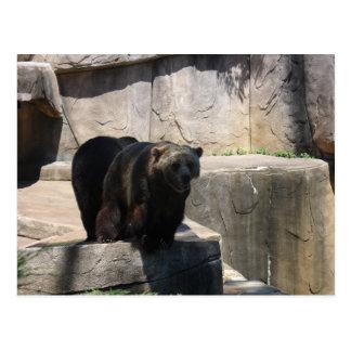 ミルウォーキーの動物園くま ポストカード