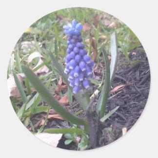 ムスカリの花の写真撮影 ラウンドシール