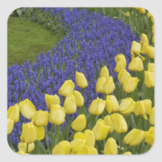 ムスカリの花の庭パターン スクエアシール