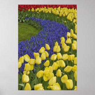 ムスカリの花の庭パターン ポスター