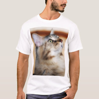 メインのあらいぐまの子ネコのTシャツ、Tortieの銀製の男性 Tシャツ