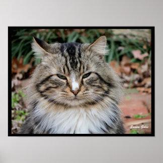 メインのあらいぐま猫のポートレートの価値ポスター紙 ポスター