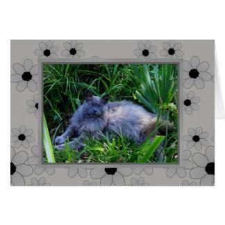 メインのあらいぐま猫のメッセージカード/中ブランク カード
