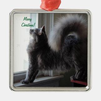 メインのあらいぐま猫の写真 メタルオーナメント
