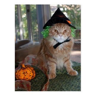 メインのあらいぐま猫の魔法使いの郵便はがき ポストカード
