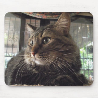 メインのあらいぐま猫のmousepad マウスパッド