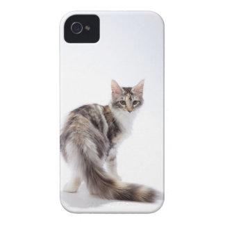 メインのあらいぐま猫 Case-Mate iPhone 4 ケース