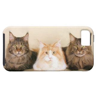 メインのあらいぐま猫 iPhone SE/5/5s ケース