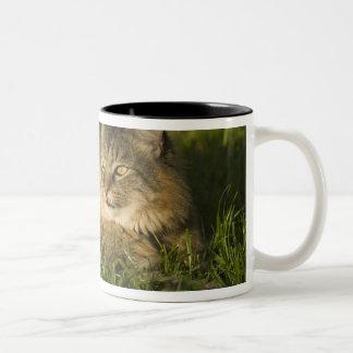 メインのあらいぐま(国内猫の最も大きい品種) ツートーンマグカップ