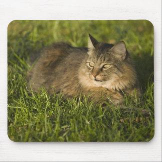メインのあらいぐま(国内猫の最も大きい品種) マウスパッド