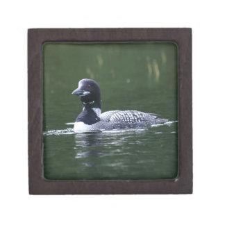 メインの水潜り鳥 ギフトボックス