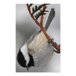 メインの《鳥》アメリカゴガラ 便箋