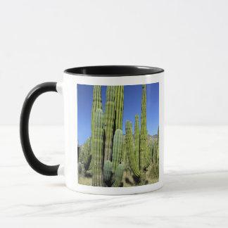 メキシコのソノラ、San Carlos。 サグアロ及びオルガン管 マグカップ