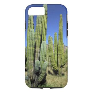 メキシコのソノラ、San Carlos。 サグアロ及びオルガン管 iPhone 8/7ケース