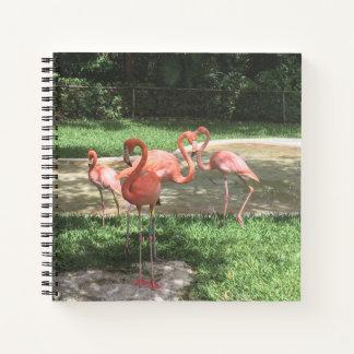 メキシコのリビエラのマヤのフラミンゴ ノートブック