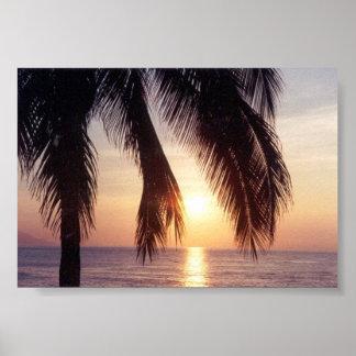 メキシコ日没のやし ポスター