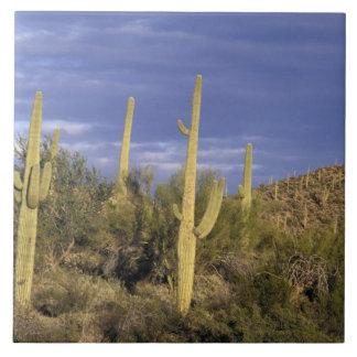 メキシコ、Baja del NorteのCatavinaの砂漠の国民2 タイル