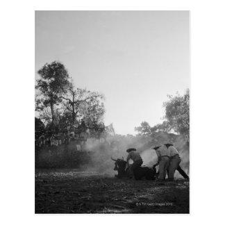 メキシコcharrosのbullfightersのねじれのグループ ポストカード