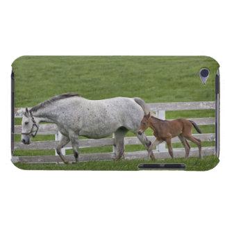 メスのサラブレッドおよび若者の子馬 Case-Mate iPod TOUCH ケース