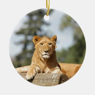 メスのライオン セラミックオーナメント