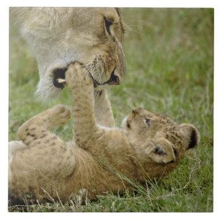 メスのライオン、マサイ語マラと遊んでいるライオンの子 タイル