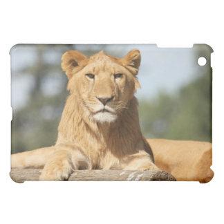 メスのライオン iPad MINI CASE