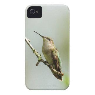メスのルビーthroatedハチドリ Case-Mate iPhone 4 ケース
