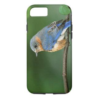 メスの東のブルーバード、Sialiaのsialis iPhone 8/7ケース