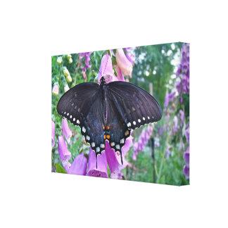 メスのSpicebushのアゲハチョウの蝶 キャンバスプリント