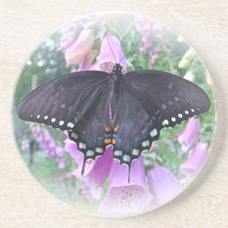 メスのSpicebushのアゲハチョウの蝶 コースター