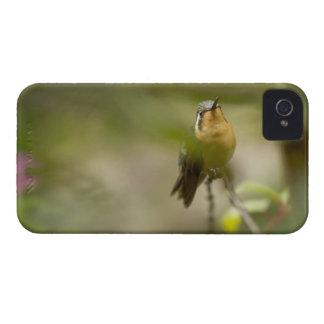メス山の宝石のハチドリ Case-Mate iPhone 4 ケース