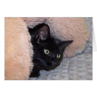 メッセージカード: ベイリー幸運な黒猫 カード