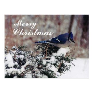 メリーなアオカケスの雪クリスマス-カスタマイズポスト ポストカード