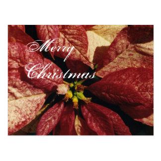 メリーなpoinsittaクリスマス-カスタマイズ郵便はがき ポストカード