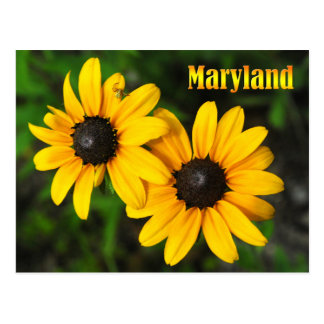 メリーランドの州花: 黒目のスーザン ポストカード